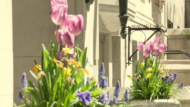 Macaulay Facade in spring